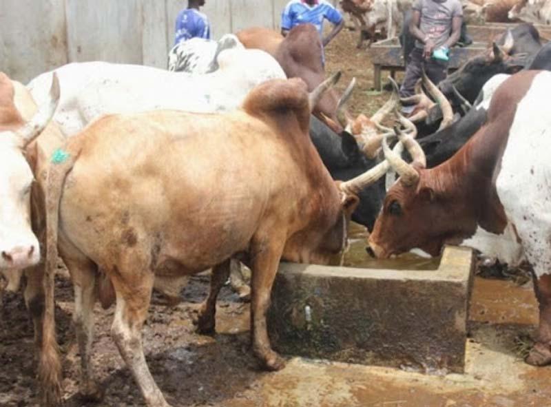Impact du coronavirus sur le pastoralisme : le CILSS prévient sur des risques de tension