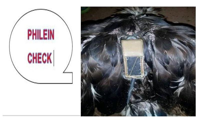 #PhileinCheck: non, cet oiseau n'est pas un espion!