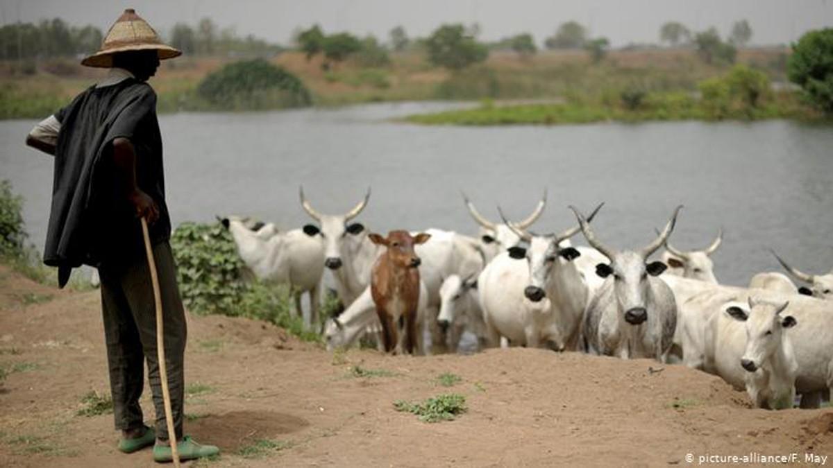 Nigéria : «[ndlr] la violence entre éleveurs et agriculteurs pourrait s'intensifier» (rapport)